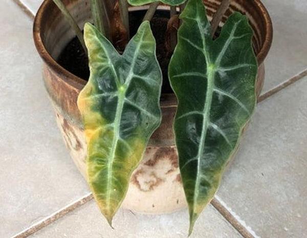 bitki bakimi