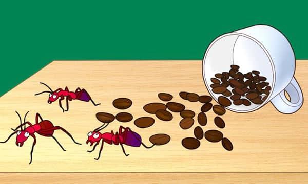 kahve telvesinin eviniz icin farkli kullanim alanlari